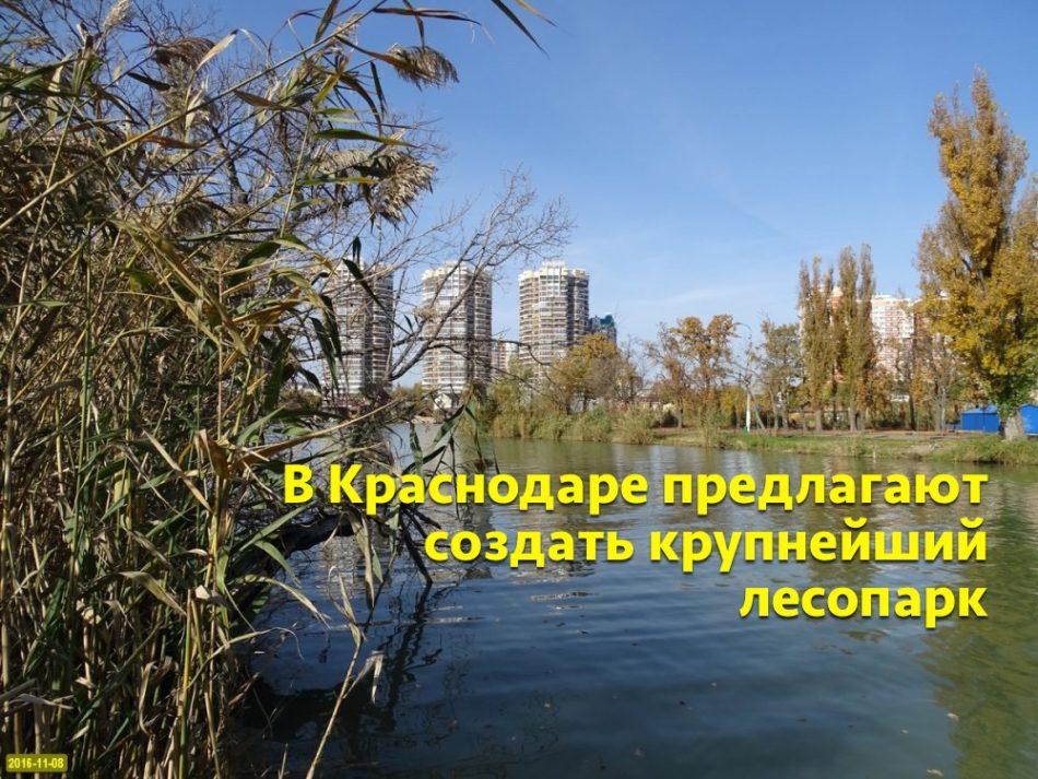 В Краснодаре предлагают создать крупнейший лесопарк